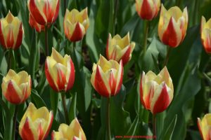 Parco Giardino Sigurtà, Innamorati in Viaggio (4)